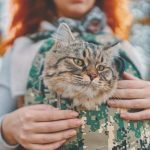best cat carrier for nervous cats